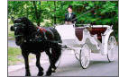 Weddings: transportation